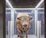 Bull in glass cage
